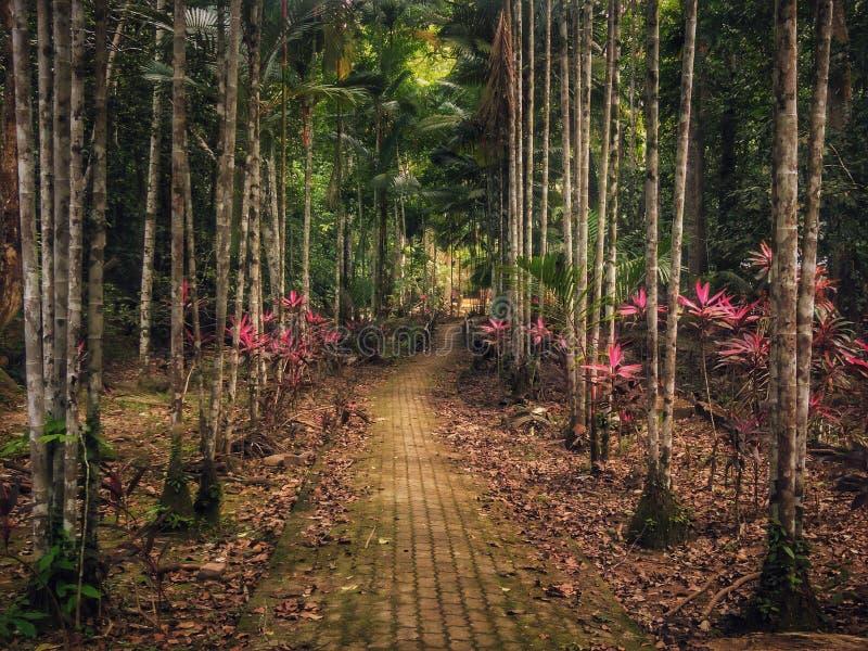 Тропа в лесе Bukit Wang рекреационном в Jitra, Kedah, Малайзии стоковые изображения