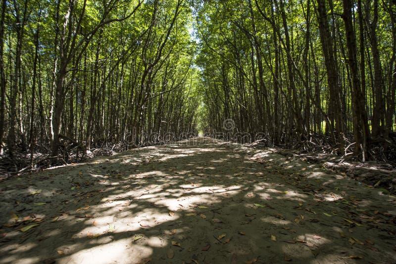 Тропа в мангрове на компасной площадке суда ` s Gio чонсервной банкы стоковые фото
