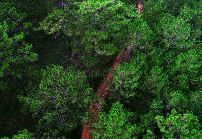 Тропа в середине соснового леса стоковая фотография