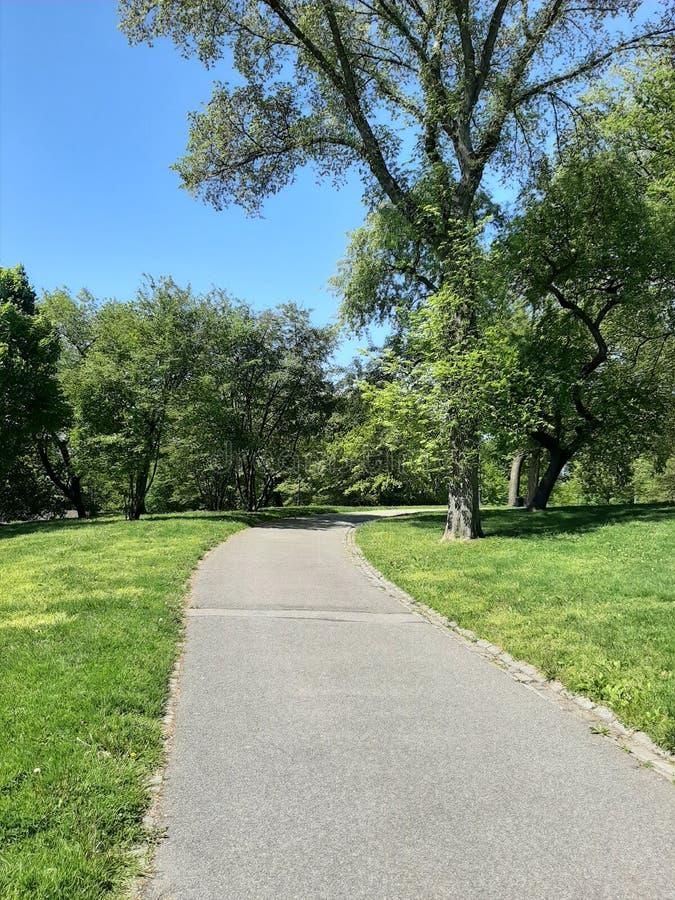 Тропа в центральном парке, Манхэттене, Нью-Йорке стоковое изображение