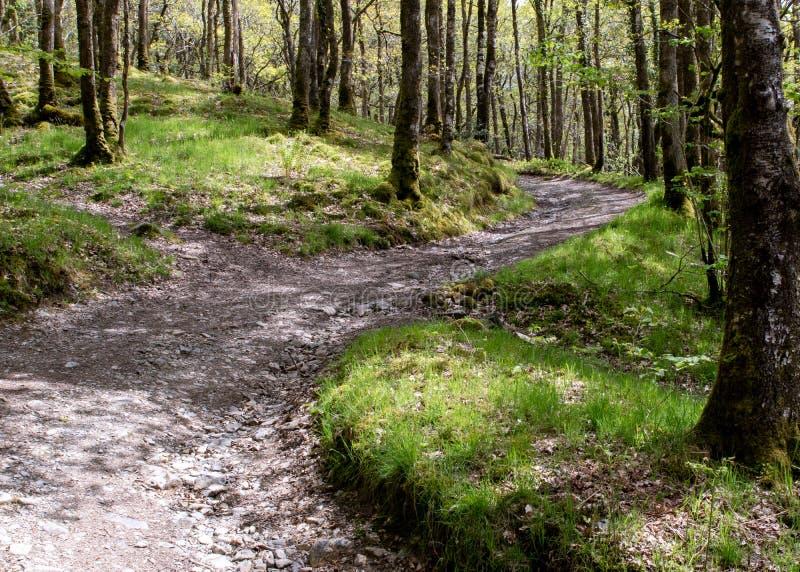 Тропа грязи snakes свой путь вверх по холму и между высокорослым тонким gr стоковые изображения rf