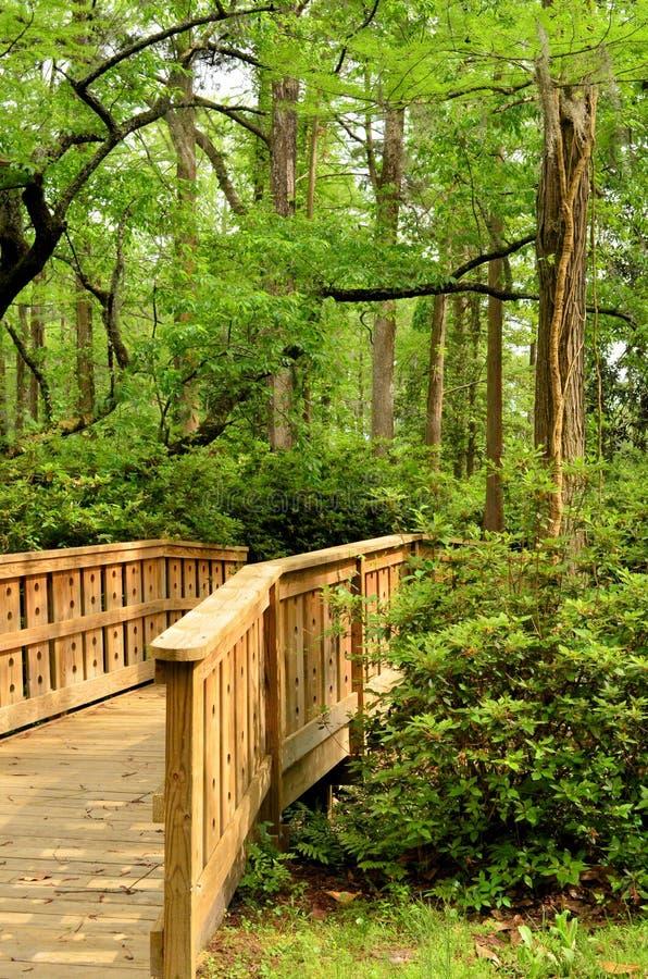 Тропа деревянного моста в портрет древесин стоковые изображения rf
