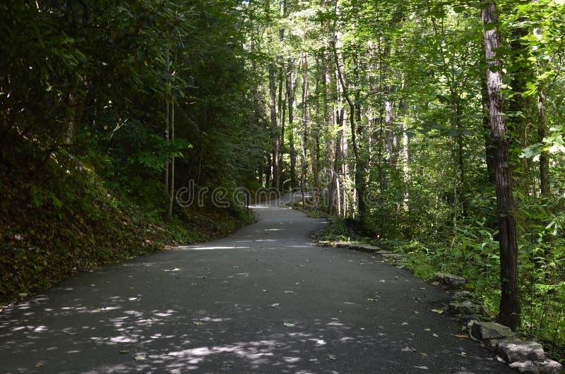 Тропа леса стоковая фотография rf