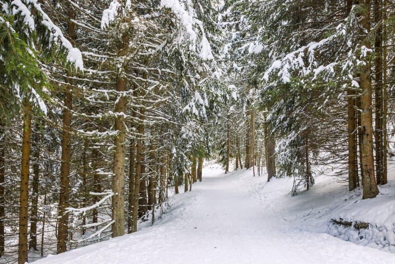 Тропа зимы стоковая фотография