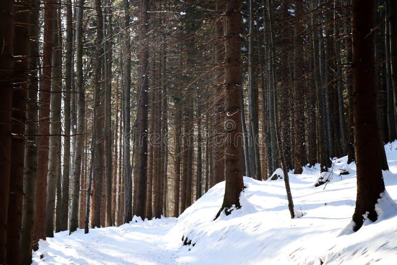 Тропа на верхней части холма и леса стоковые изображения