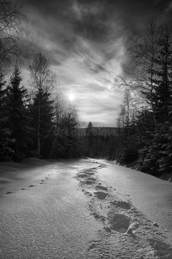 Тропа на снеге в Harrachov в национальном парке Karkonose Зима, чехия 2013 стоковое фото rf