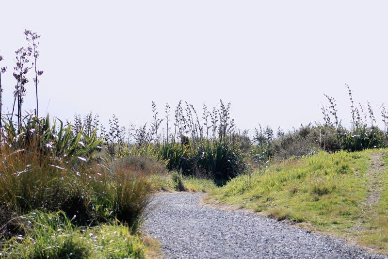 Тропа Новой Зеландии прибрежная стоковое фото rf