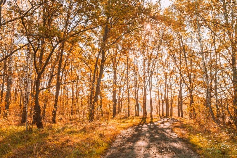 Тропа пути дороги пути в лесных деревьях осени солнечных стоковые изображения