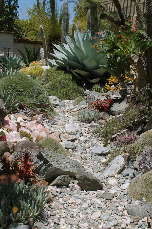 Тропа утеса через Succulents стоковое изображение