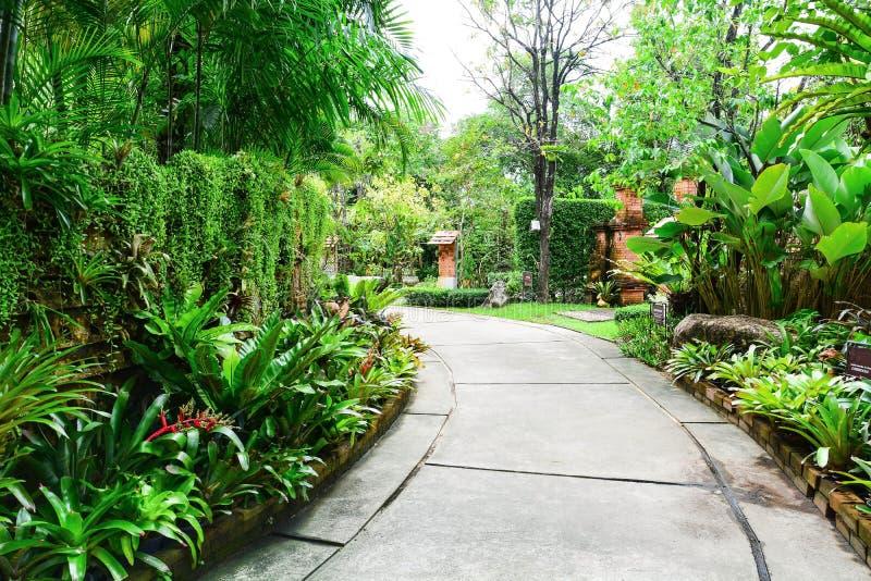 Тропа цемента через зеленый парк стоковые изображения rf