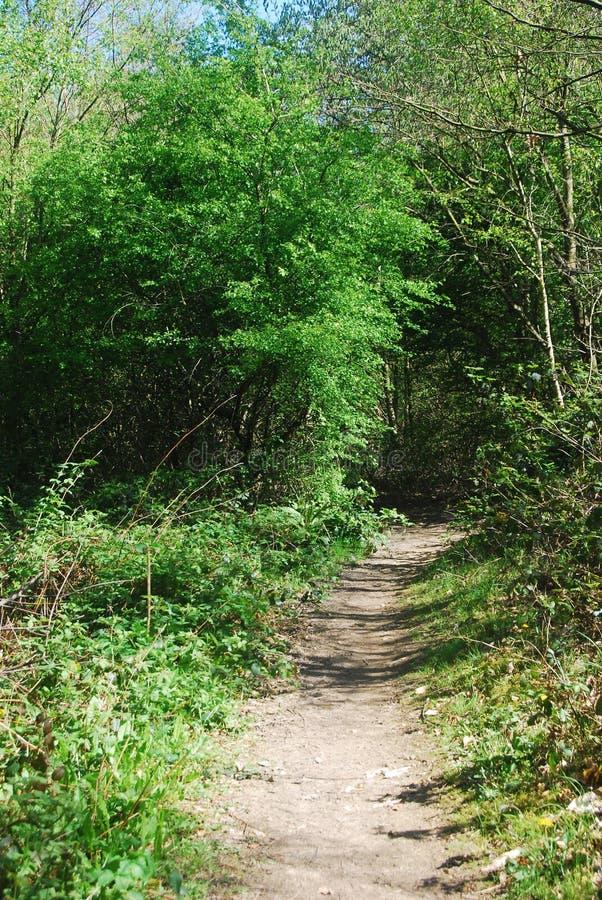Тропа через деревья и ежевичники стоковые изображения rf