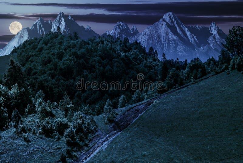 Тропа через лес на горном склоне на ноче стоковые фотографии rf