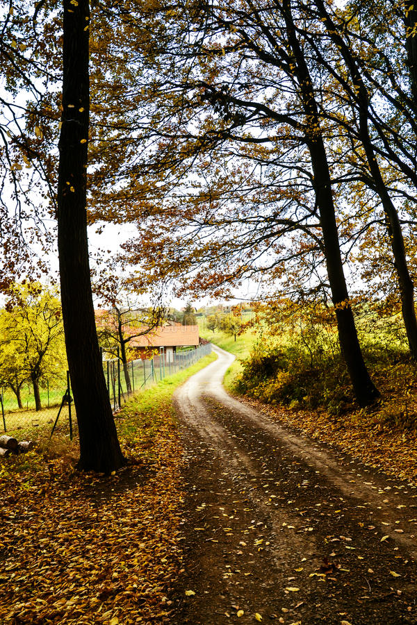 Тропа через лес осени стоковая фотография