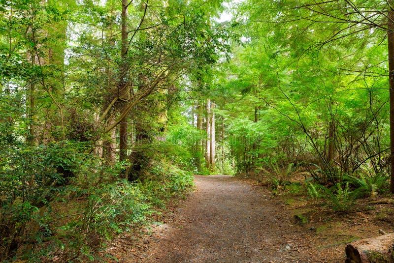Тропа через лес вдоль реки Левиса и Clark стоковые фотографии rf