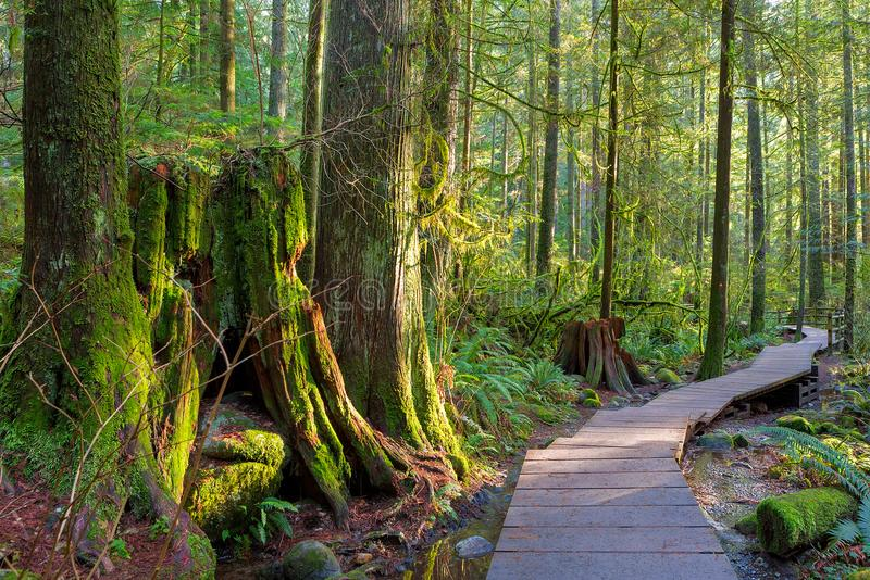 Тропа через лес в парке Ванкувере ДО РОЖДЕСТВА ХРИСТОВА Канаде каньона Lynn стоковое изображение rf