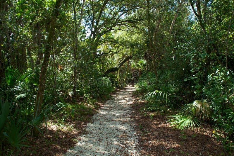 Тропа через субтропический лес стоковое изображение