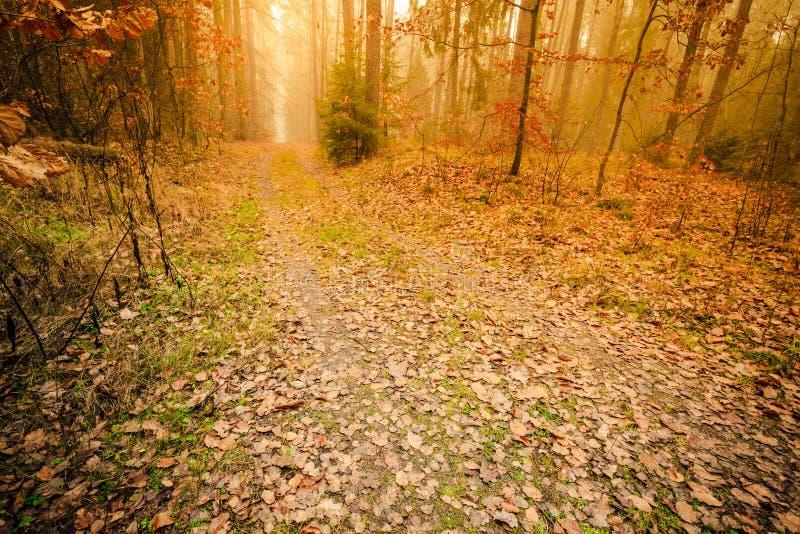 Тропа через туманный лес осени стоковые фотографии rf