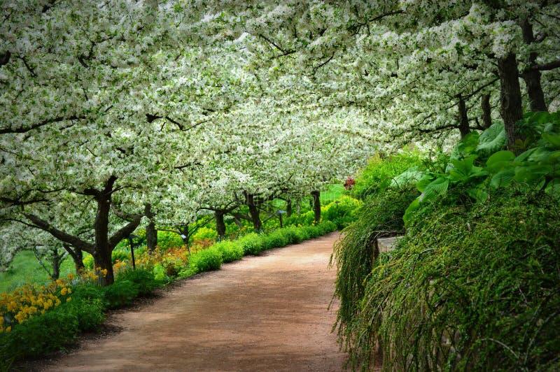Тропа яблоневого сада стоковое фото rf