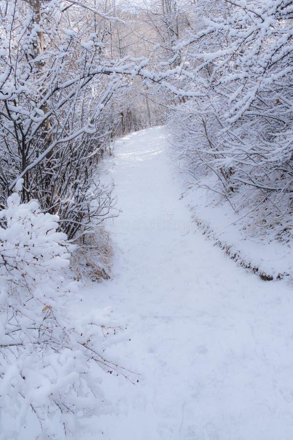 Тропа 3 Snowy стоковая фотография rf