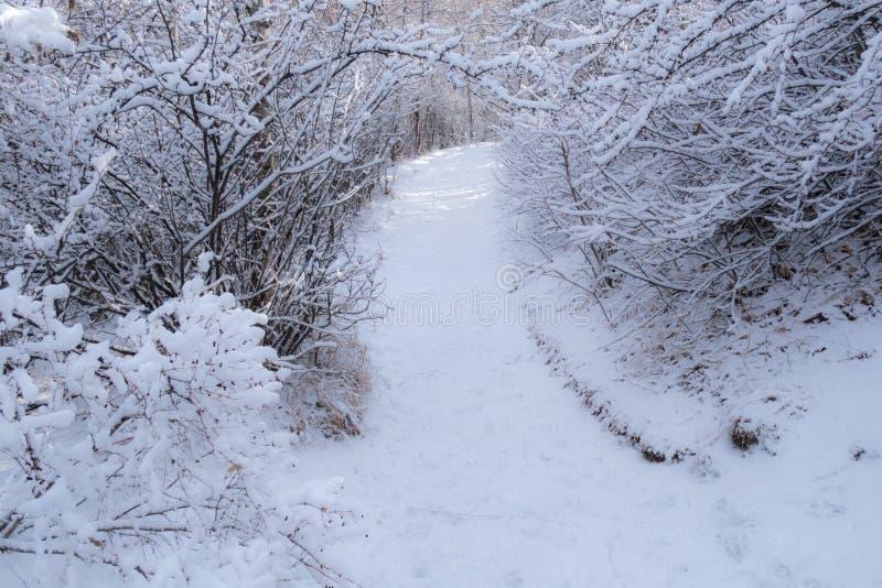 Тропа 2 Snowy стоковые изображения rf