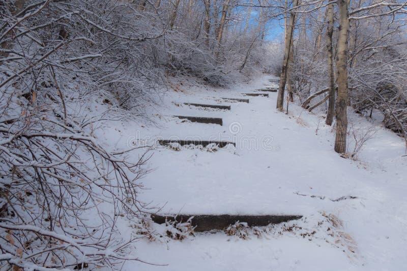 Тропа Snowy стоковое фото rf