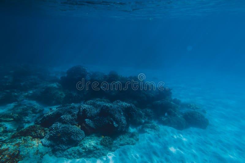 Тропическая живая природа с кораллами и песком подводна Морская жизнь в Тихом океане стоковое фото