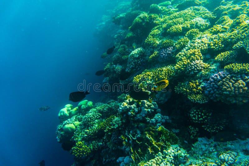Тропическая жизнь океана Коралловый риф вполне рыб плавая под воду отделывает поверхность Свет солнечных лучей через пульсации стоковое изображение rf