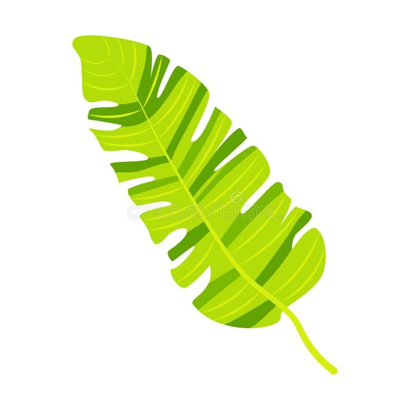 Тропическая иллюстрация вектора лист банана бесплатная иллюстрация