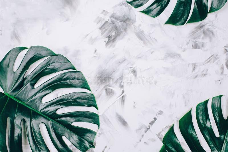 Тропическая картина monstera на текстурированной конкретной предпосылке стоковые фотографии rf