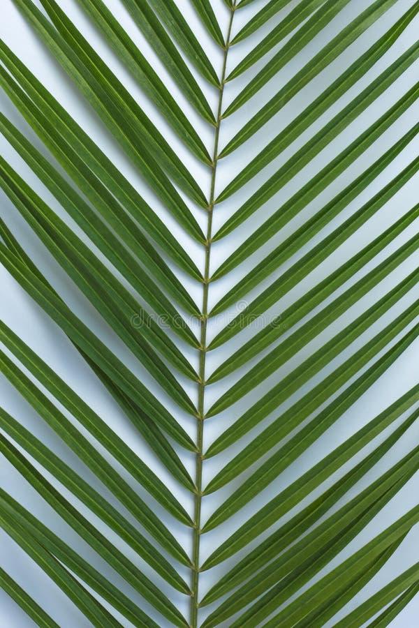 Тропическая ладонь выходит на голубую предпосылку как абстрактная предпосылка стоковые изображения