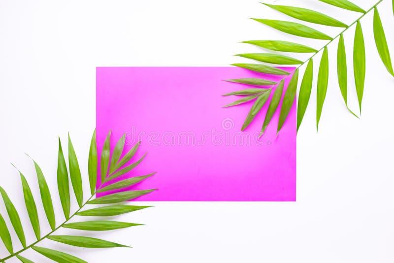 Тропическая ладонь выходит на розовую предпосылку E Квартира кладет с космосом экземпляра Лист зеленого цвета взгляда сверху на б бесплатная иллюстрация