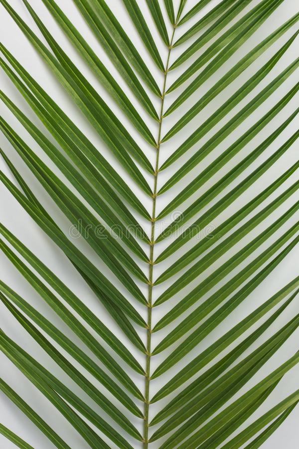 Тропическая ладонь выходит на светлую предпосылку как абстрактная предпосылка стоковая фотография rf