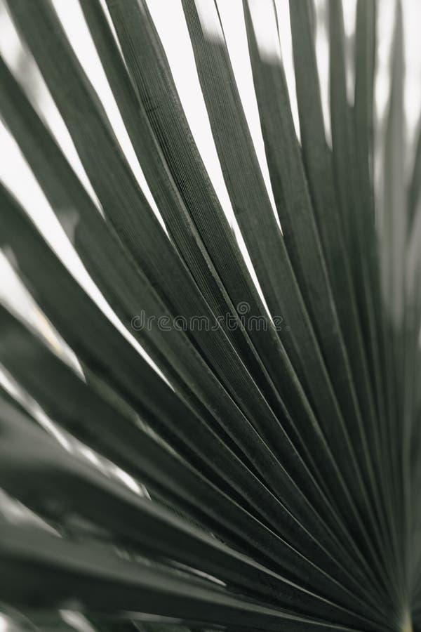 Тропическая ладонь выходит предпосылка цветочного узора стоковое фото rf