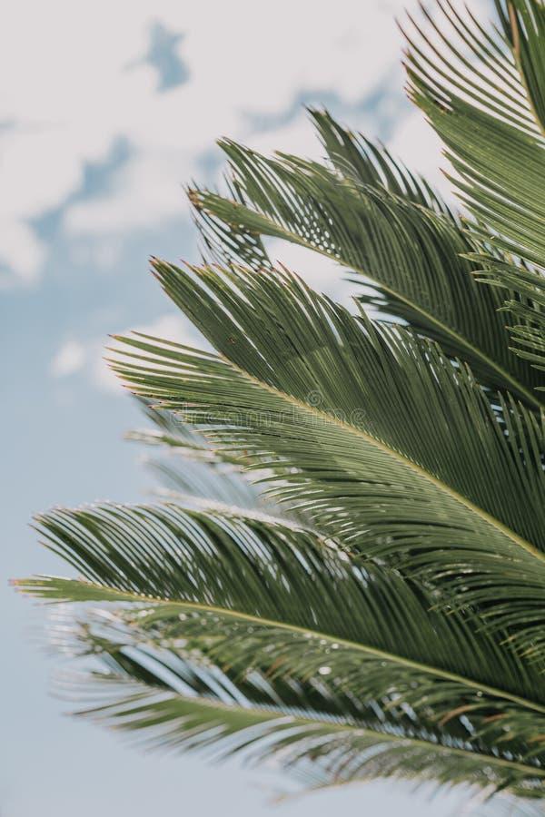 Тропическая ладонь выходит предпосылка цветочного узора стоковое изображение rf