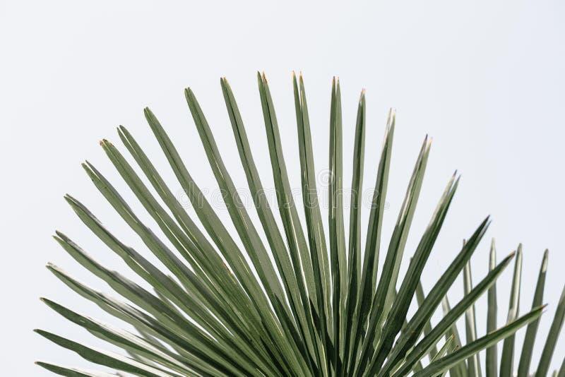 Тропическая ладонь выходит предпосылка цветочного узора стоковые изображения rf