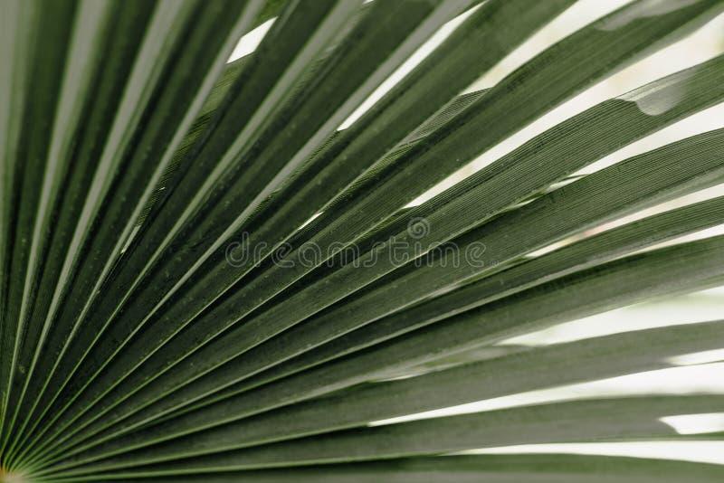 Тропическая ладонь выходит предпосылка цветочного узора стоковая фотография rf