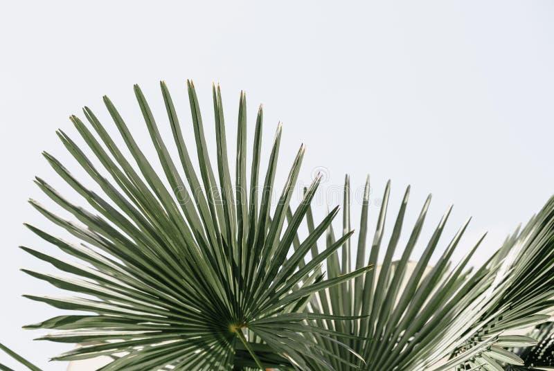 Тропическая ладонь выходит предпосылка цветочного узора стоковые фотографии rf