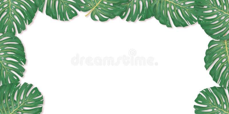 Тропическая ладонь выходит рамка на белый фон Лист лета тропические Экзотические гавайские джунгли, предпосылка летнего времени П иллюстрация штока