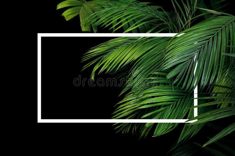 Тропическая ладонь выходит фон природы куста завода тропического леса с белым положением рамки вне на черную предпосылку стоковая фотография rf