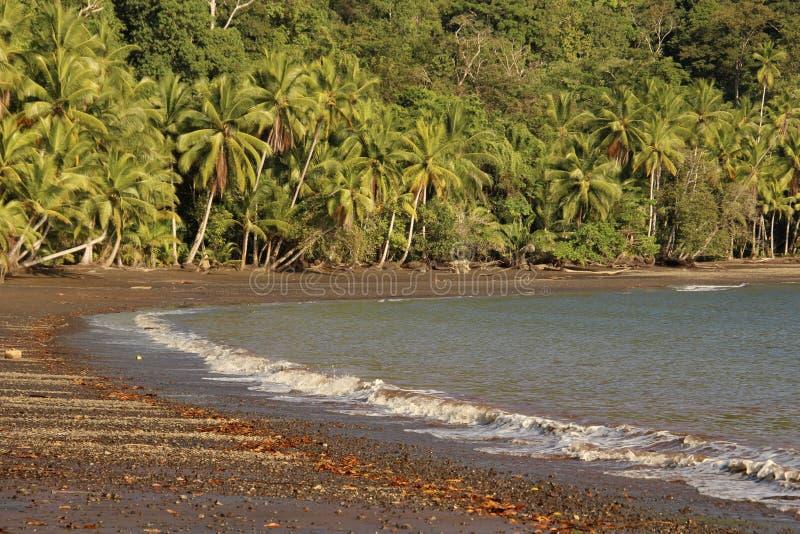 Тропическая линия берега стоковые изображения