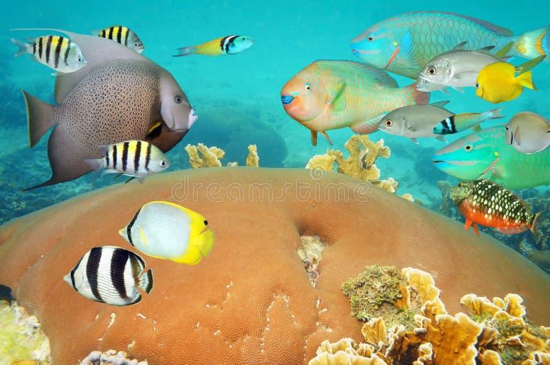 Тропическая подводная жизнь с красочными рыбами коралла стоковая фотография