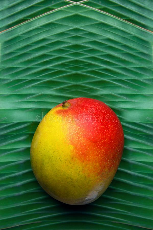 Тропическая предпосылка еды природы Зрелое красочное манго на лист ладони конспекта струят растительностью, который Каникулы пере стоковое изображение rf
