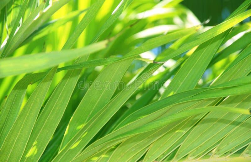 Download Тропическая предпосылка листьев Стоковое Изображение - изображение насчитывающей экзотическо, листья: 33733307