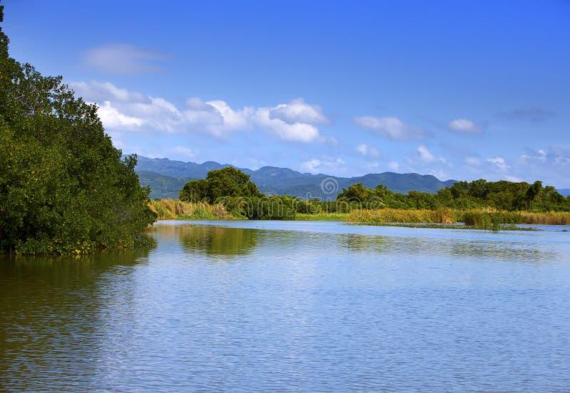 Тропическая пуща мангровы чащ на черном реке ямайка стоковые изображения