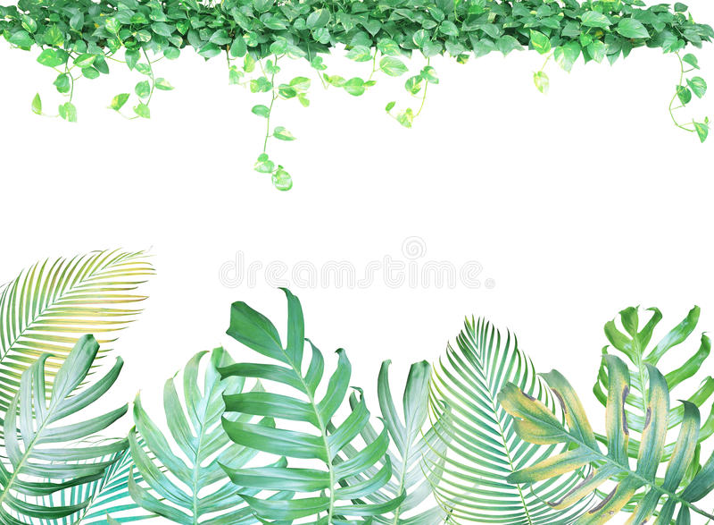 Тропическая рамка листьев с филодендроном Monstera, ладонью выходит иллюстрация вектора