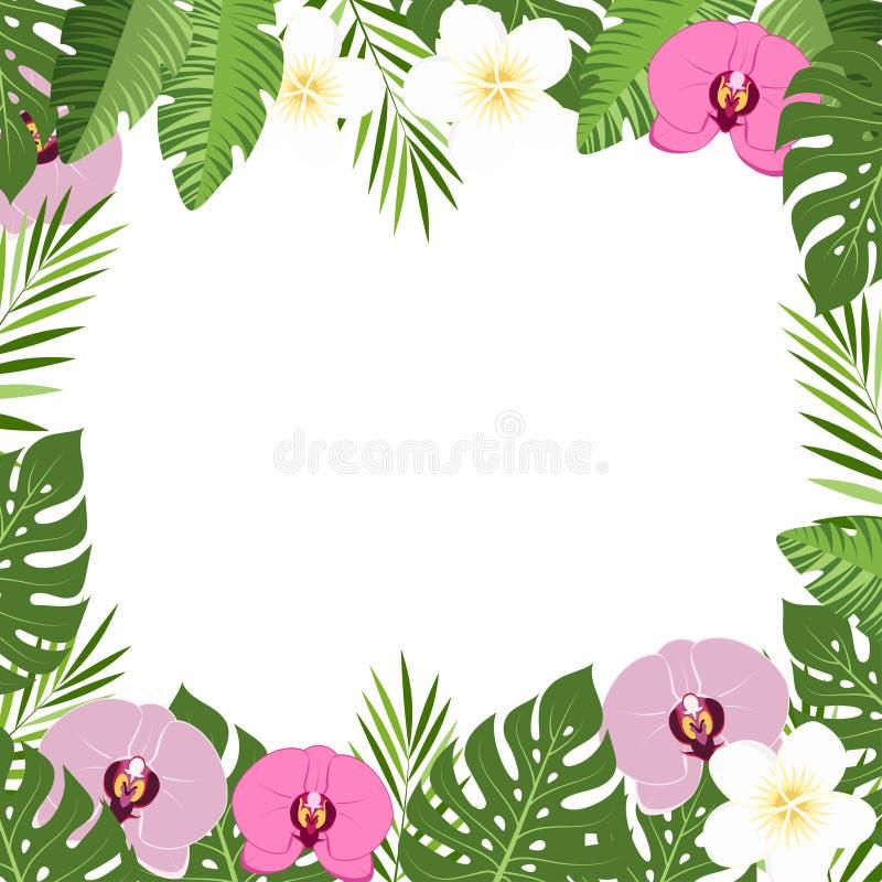 Тропическая рамка лета орхидеи листьев и цветков иллюстрация штока