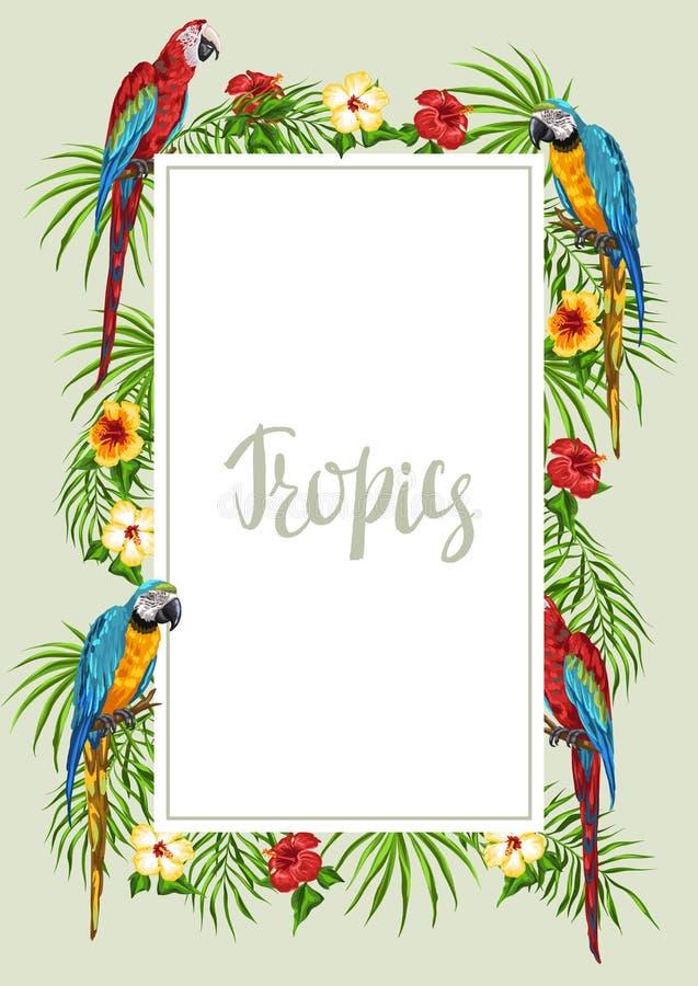 Тропическая рамка с попугаями бесплатная иллюстрация