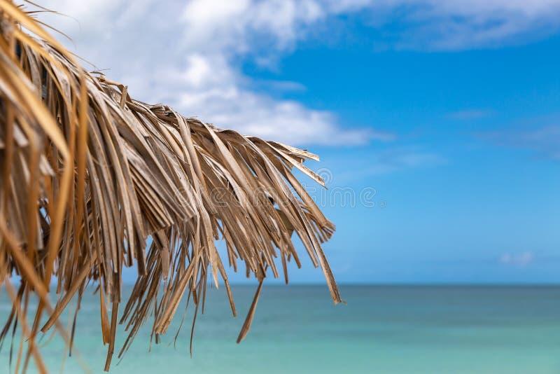Тропическая релаксация стоковые изображения rf