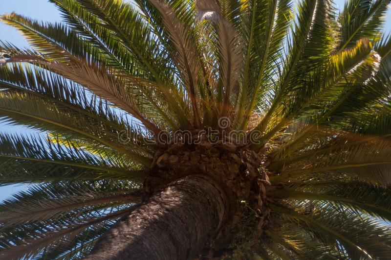Тропическая солнечность Palmtree стоковое фото rf