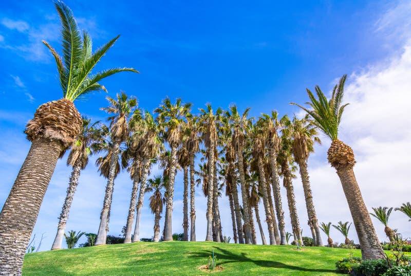 Тропическая сцена группы в составе пальмы на траве, Крите стоковые изображения rf